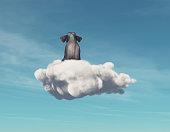 Elephant stays on a cloud.