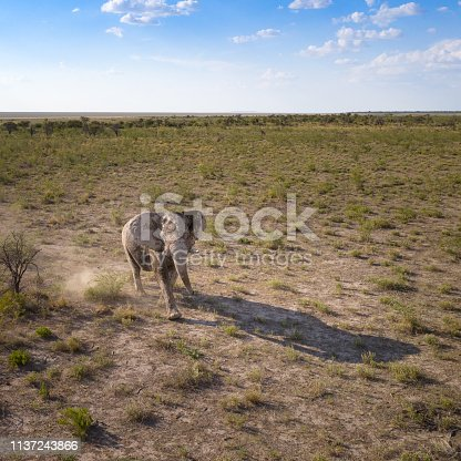 1137909085 istock photo Elephant stomping through the Savannah, Namibia 1137243866