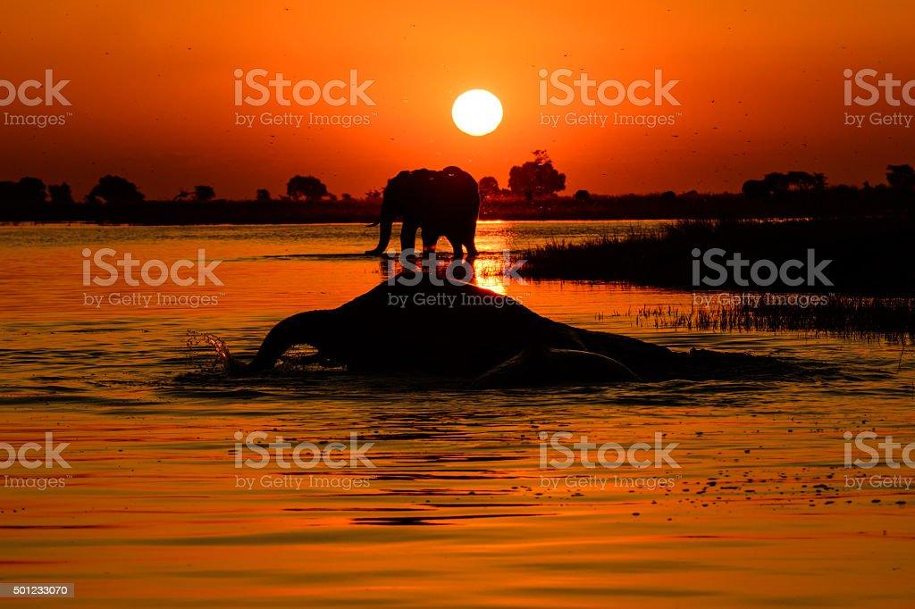 Elephant Sonnenuntergang – Foto