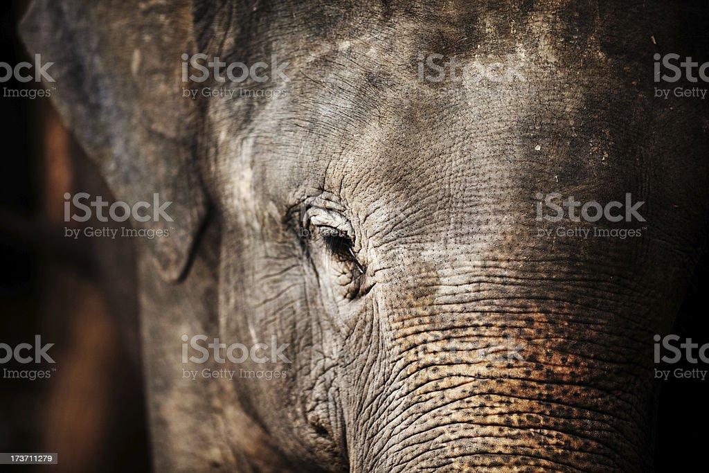 Elephant, Thailand royalty-free stock photo