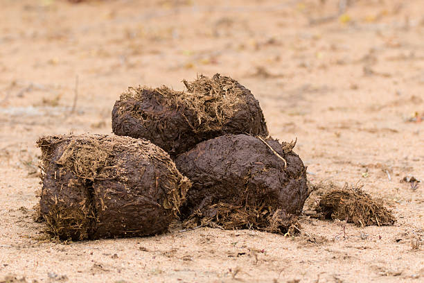 Image result for elephant dung