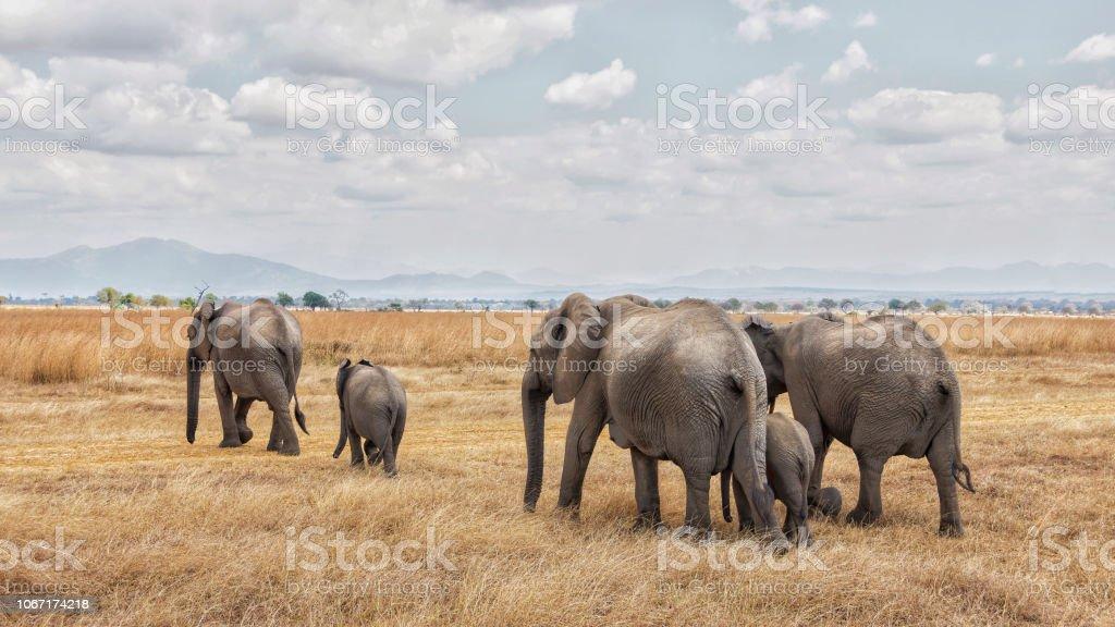 Elefant-Zug – Foto