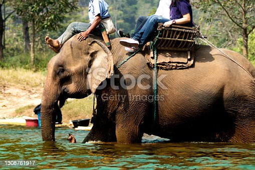 Elephant Trekking Business In Thailand, Elephant ride in a stream