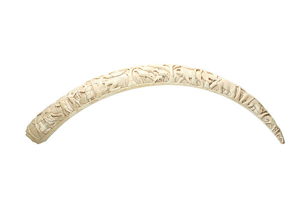 Elephant tusk Elephant's carved tusk. tusk stock pictures, royalty-free photos & images