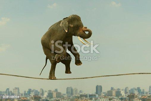 istock Elephant Walking On Rope. 923149254