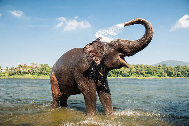 elephant washing in the river - wildplassen stockfoto's en -beelden