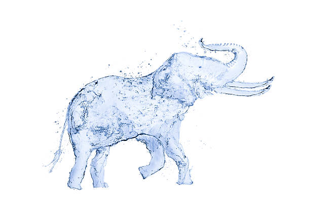 elephant water splash 3d - karikaturen zeichnen stock-fotos und bilder