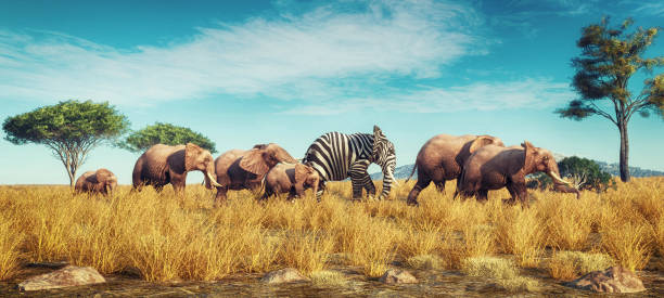 Elephant with a zebra skin into a crowd . Think outside the box concept . This is a 3d render illustration stock photo