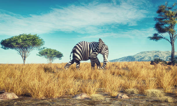 Elephant with a zebra skin walking in savannah . This is a 3d render illustration stock photo