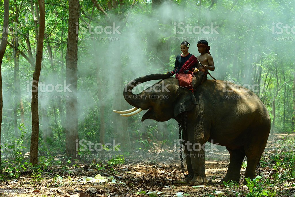 Elephant with asian girl stock photo