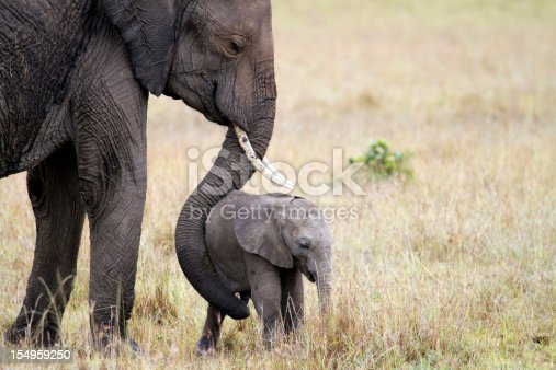 Elephant mother with her young child, Masai Mara National Park, Kenya