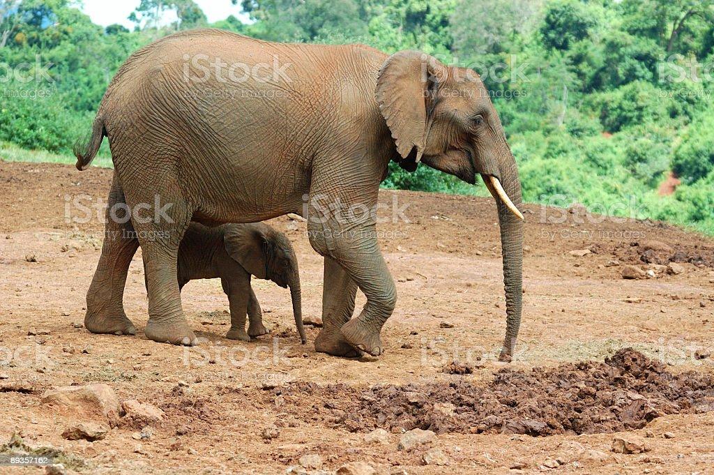 elephant with baby royaltyfri bildbanksbilder