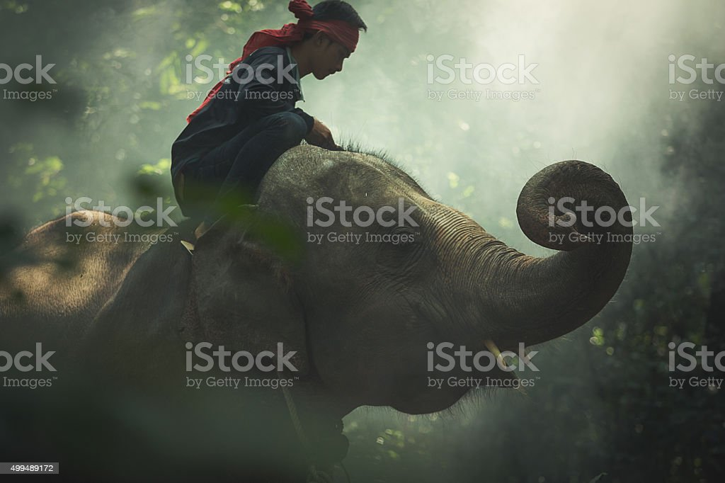 Elephant with mahout in wildlife stock photo
