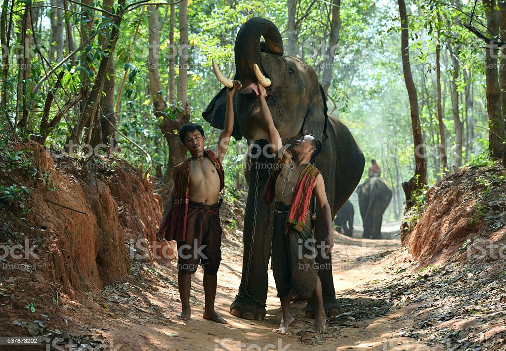 Elephant with Mahouts stock photo