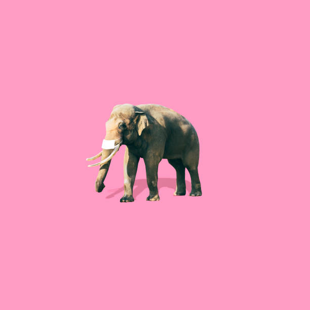 Elephant with medical mask is on soft pink background. Coronavirus concept. Art collage in minimalist style.