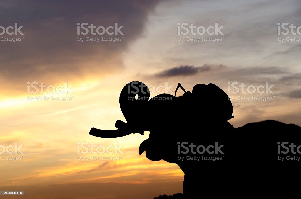 Elephant with the mahout on the sunset stock photo