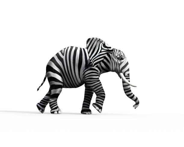 olifant met zebra skin in de studio. het concept van verschillend zijn. 3d renderen illustratie - individualiteit stockfoto's en -beelden