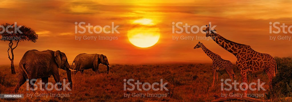 Elephants and Giraffes at African Savanna stock photo