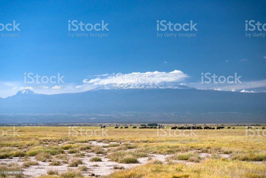 Elephants and Kilimanjaro stock photo