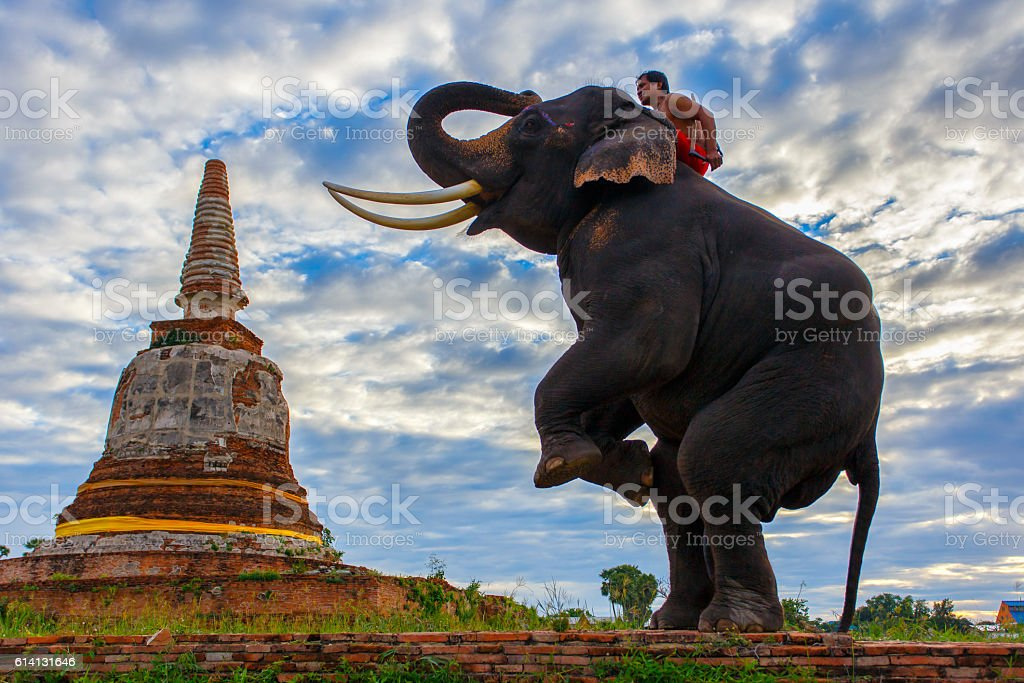 Elephants and stupa at Ayutthaya in Thailand stock photo
