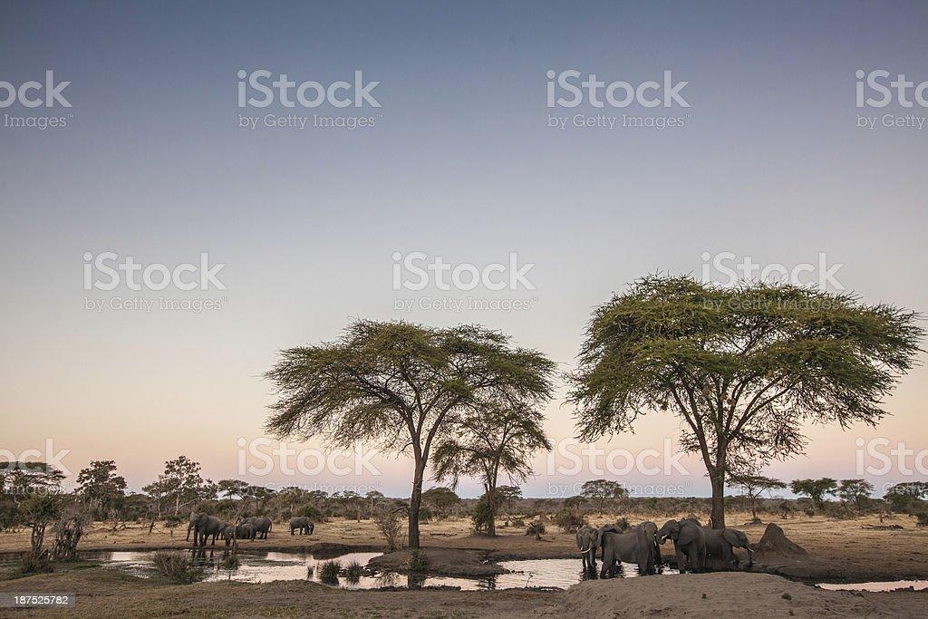 Elefanten in ein Wasserloch in der Dämmerung – Foto