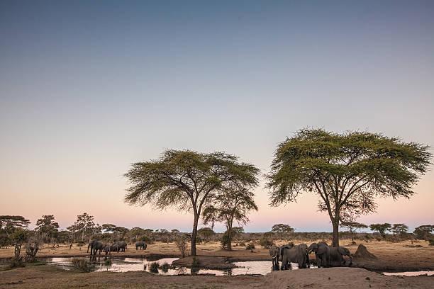 Elephants around a waterhole at dusk