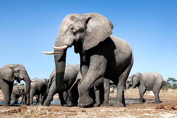 Elephants at a waterhole