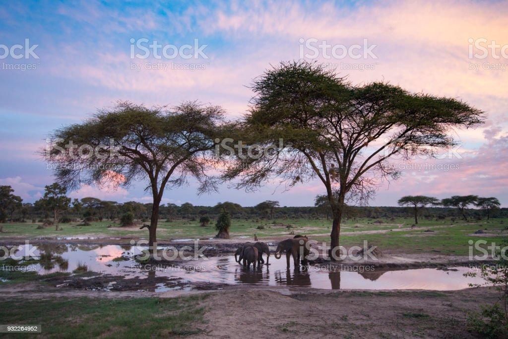 Elefanten im Wasserloch – Foto