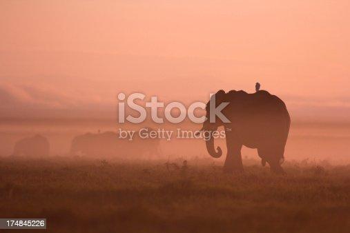 182061384 istock photo Elephants at dawn 174845226