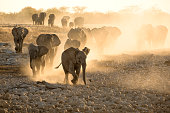 Elephants at Okaukuejo Water hole at sunset with yellow dust