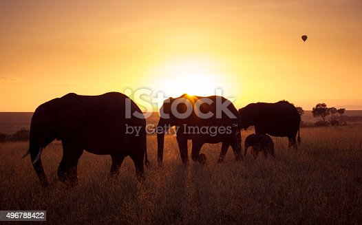 Herd of elephant in silhouette at dawn in the masai mara, Kenya