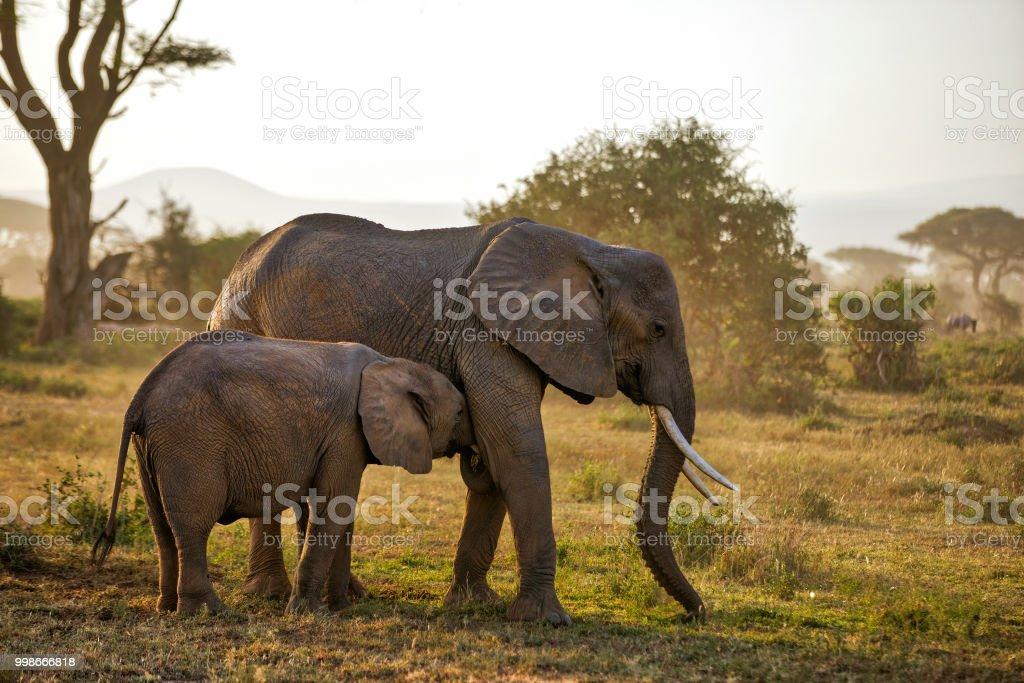 Elefanten bei Wild - Spanferkel – Foto
