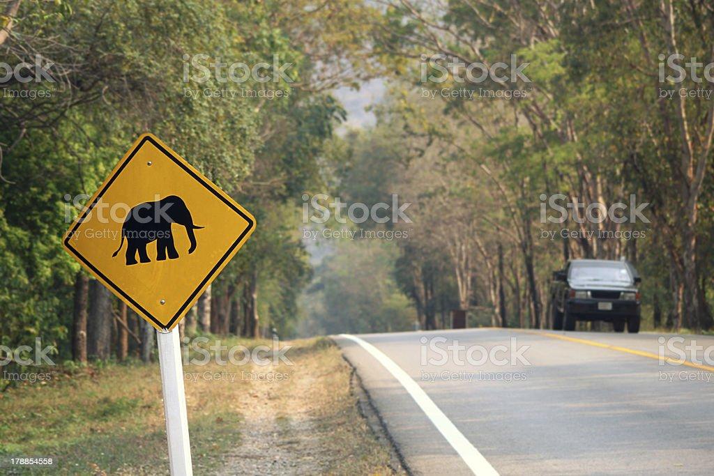 elephants crossing stock photo