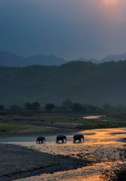 Elephants crossing ramganga dhikala jim corbett national park india picture id1175895504?b=1&k=6&m=1175895504&s=612x612&w=0&h=tb7rkgr9dts0mby2k9bx  09s5f1ap9cfk8hox7fidu=