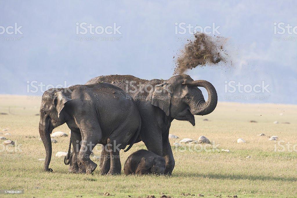 Elephants enjoying Dust bath. royalty-free stock photo