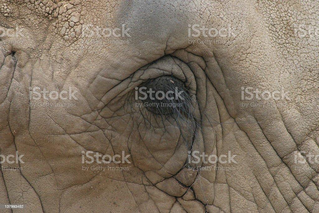 Elephants eye at the san antonio zoo royalty-free stock photo