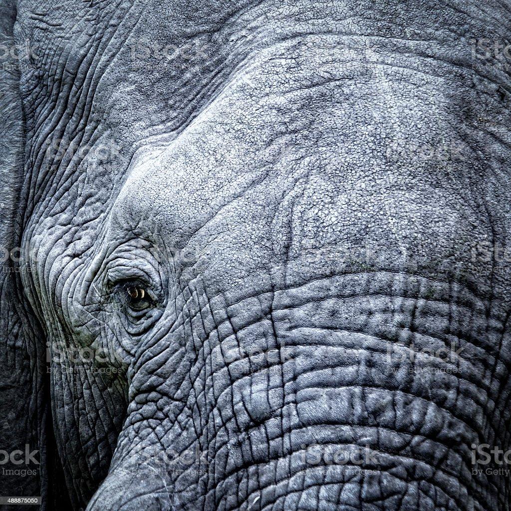 Elephant's eye close-up stock photo