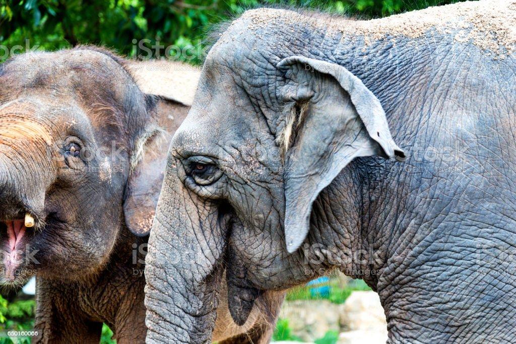 Elephant's face stock photo