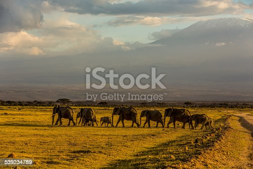 182061384 istock photo elephants family at Amboseli 539234789