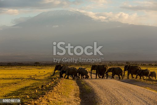 182061384 istock photo elephants family at Amboseli with safari car 539246119