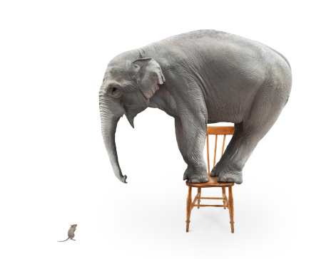 Elephant frightened by a mouse and jumped on a chair