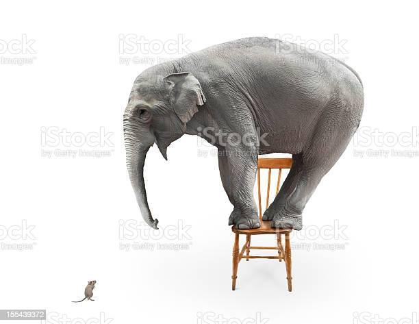Elephants fear of mice picture id155439372?b=1&k=6&m=155439372&s=612x612&h=8ijk0xolwdp0uzonomdu8yyb1sulfwon2aidb 4snei=