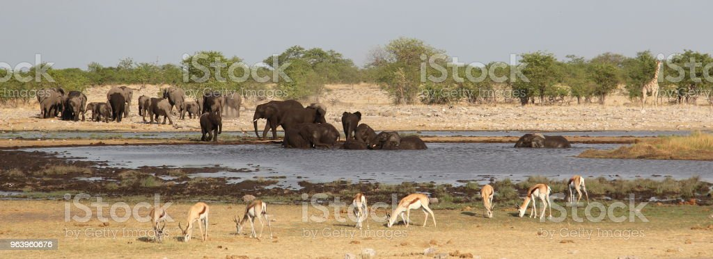 Elephants, giraffe and impalas around the waterhole - Royalty-free African Elephant Stock Photo
