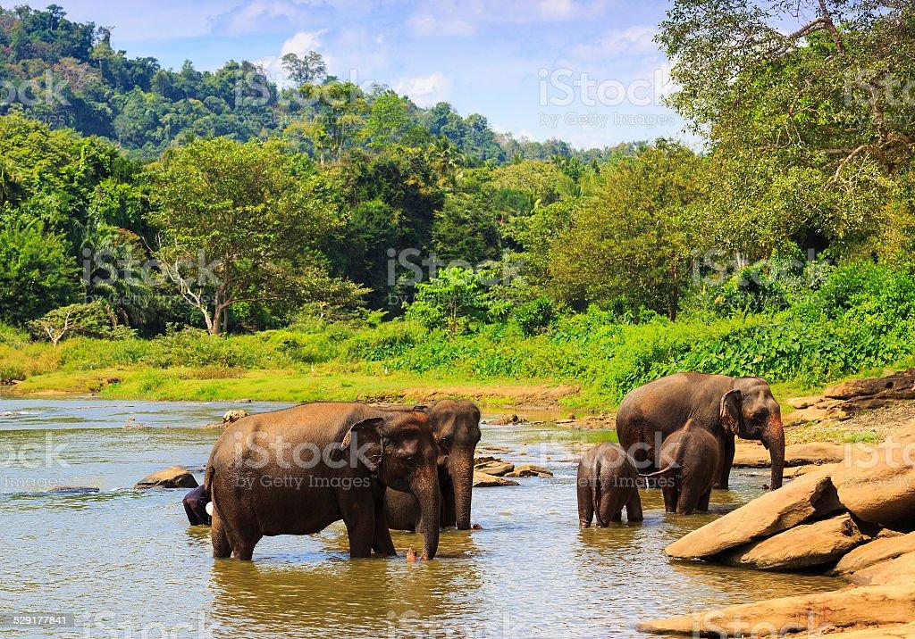 Elephants' group stock photo