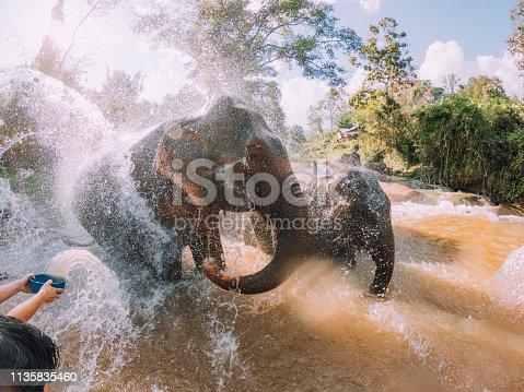 Elephants having a bath in the mud - Chang Mai region