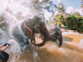 Elephants having a bath in the mud - Chang Mai region