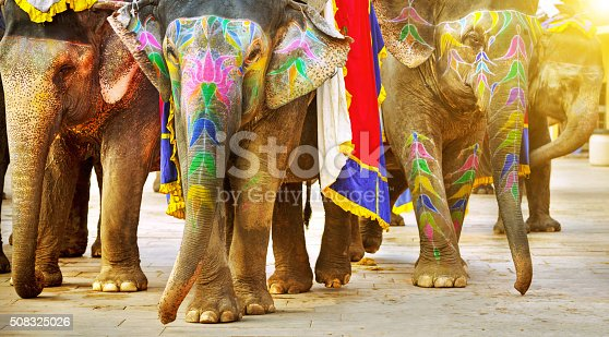Indian elephants with tourist