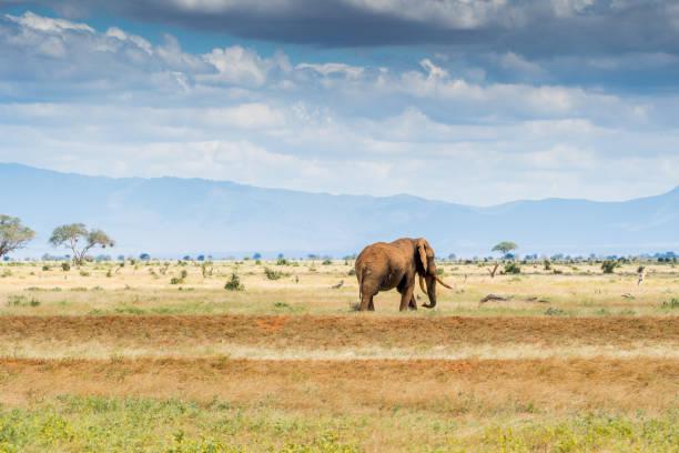 Elefanten in Kenia – Foto