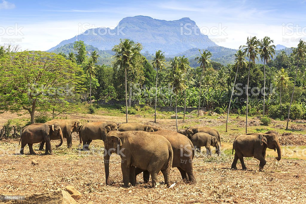 Elephants in park royalty-free stock photo
