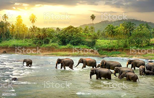 Photo of Elephants in river